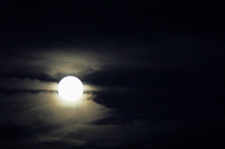 moon_nikki_seanD
