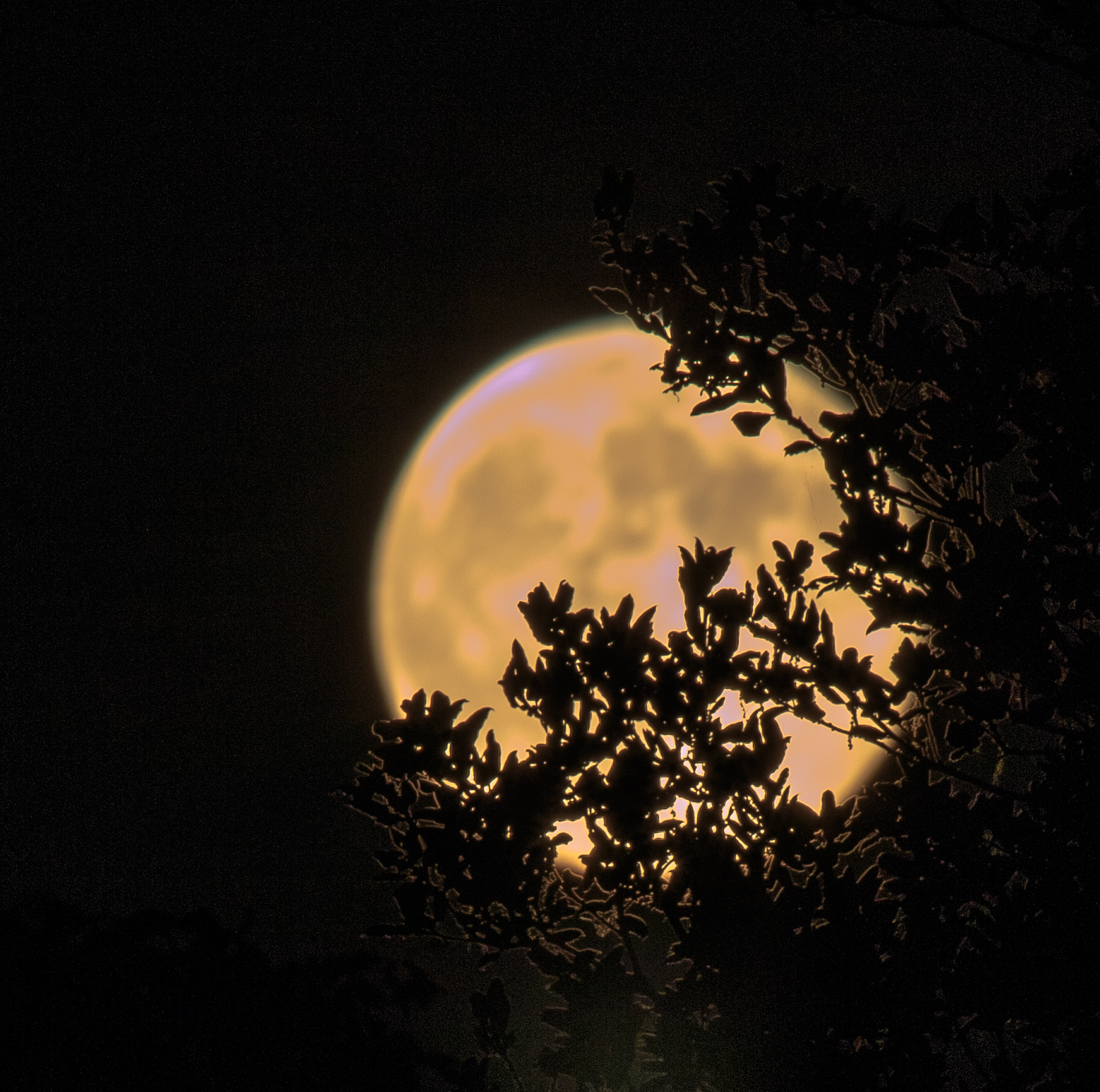 PICS: Beautiful Moon Rising Over Claycord —claycord ...