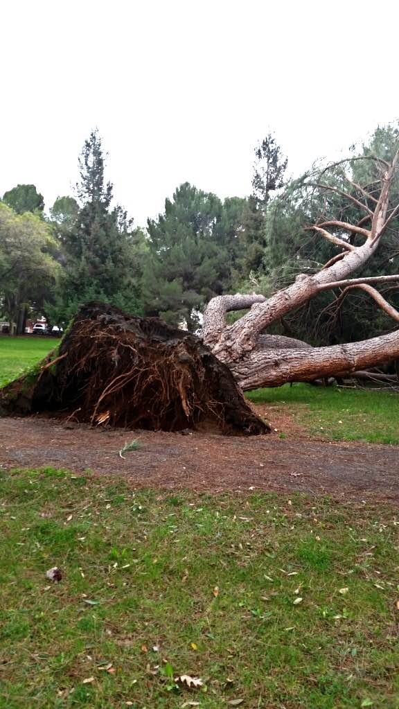 trees_shawna_carter