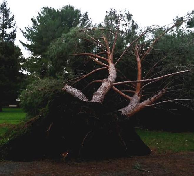 trees_shawna_carter2