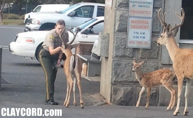 deer_photo