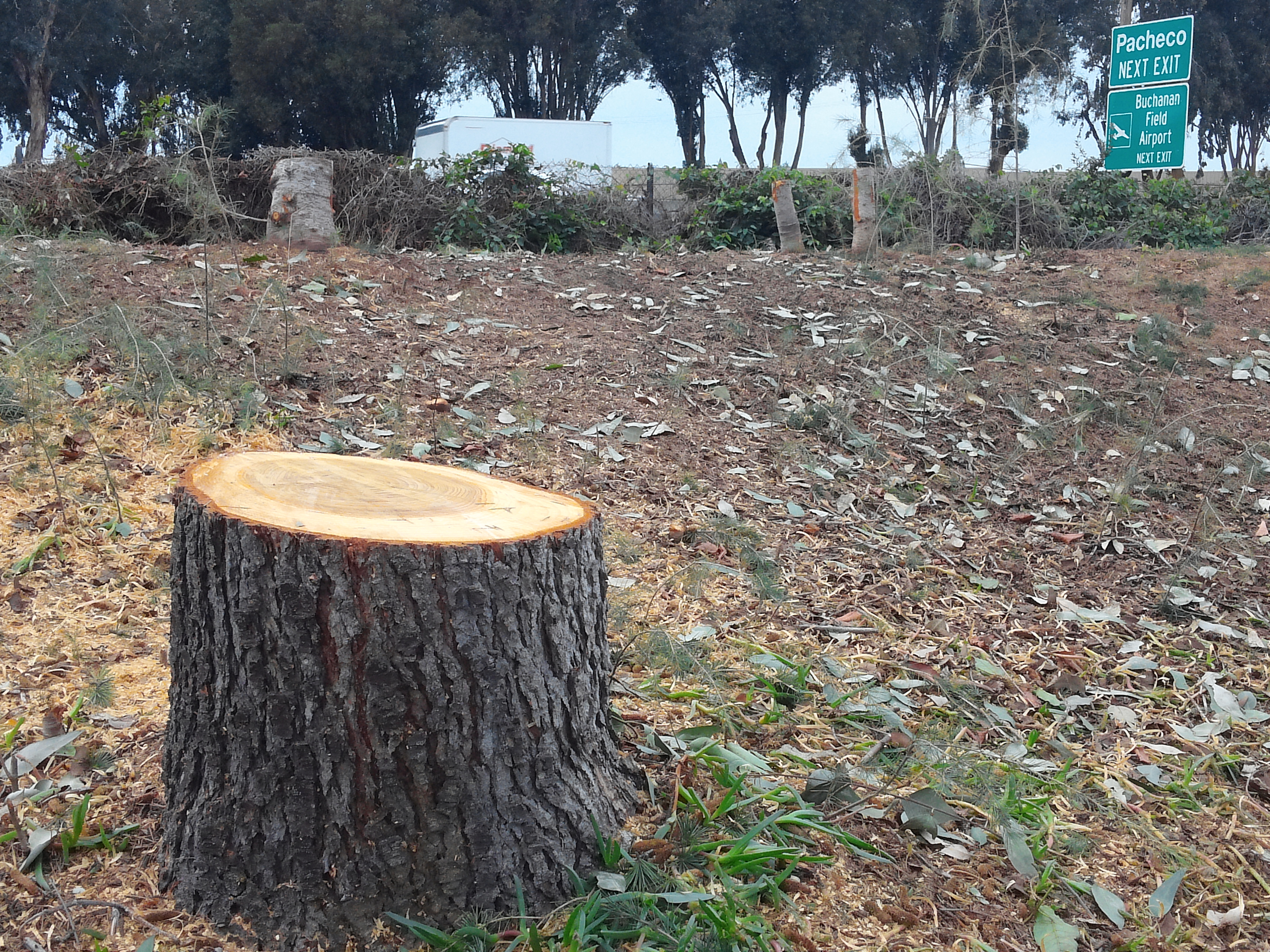 Cutting A Tree : Photos dozens of trees cut down to make room for new